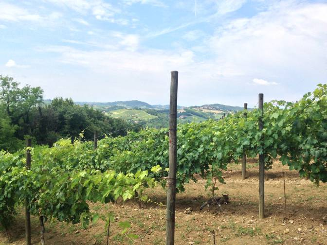 La Rocca Vineyards